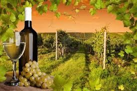 vino y viñedos