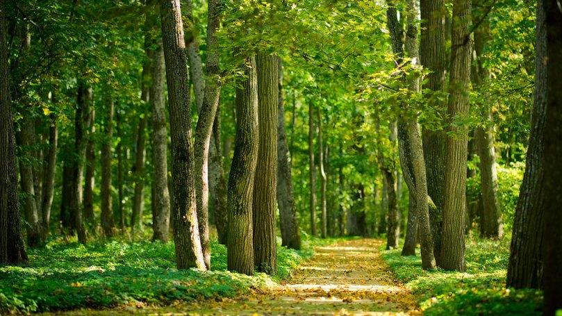 los arboles no dejan ver el bosque